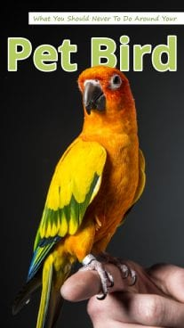 What You Should Never To Do Around Your Pet Bird 3