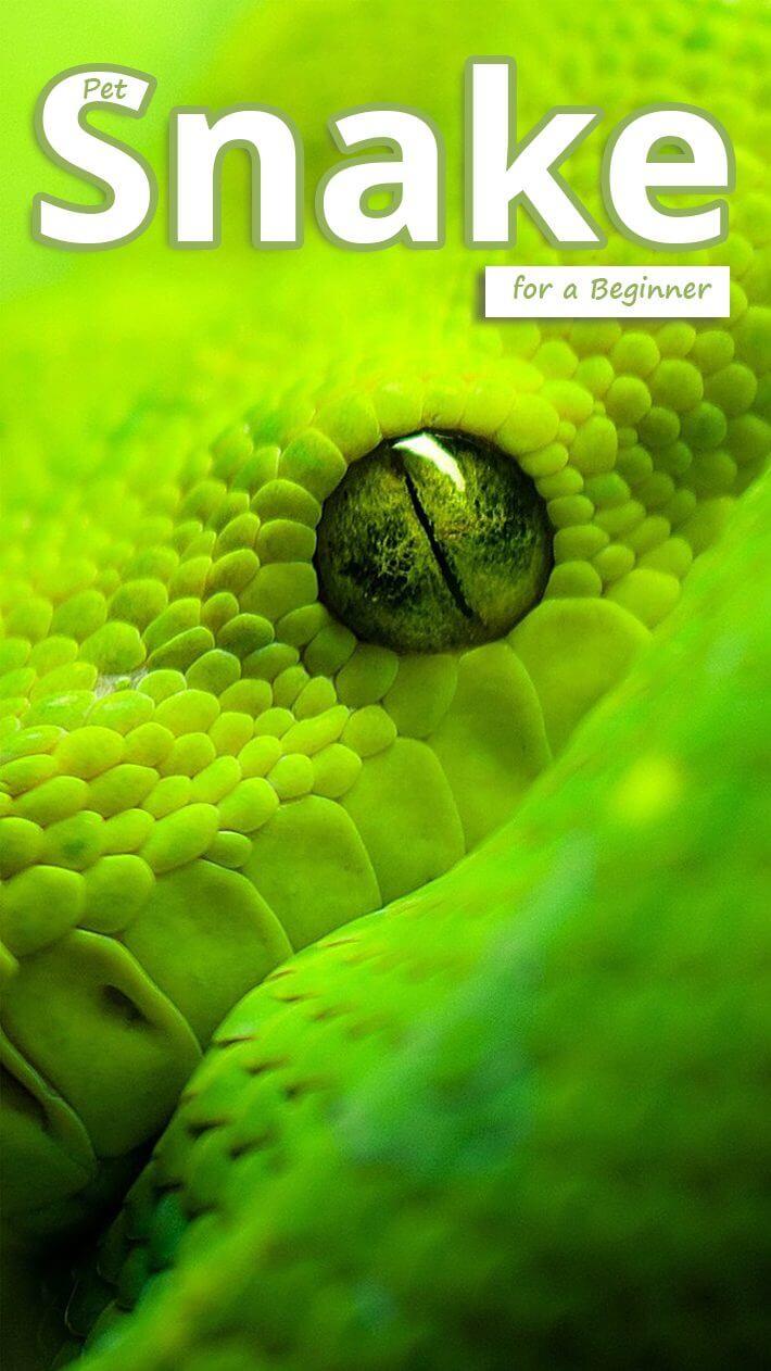 Pet Snake for a Beginner