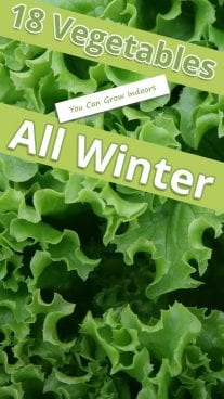 18 Vegetables You Can Grow Indoors All Winter