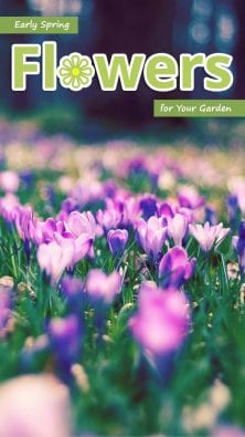 Early Spring Flowers for Your Garden