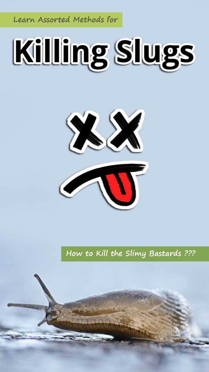 Learn Assorted Methods for Killing Slugs
