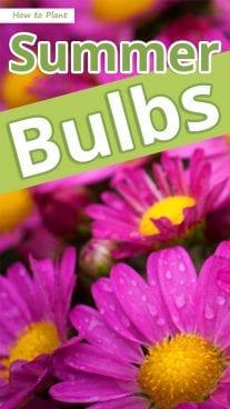 How to Plant Summer Bulbs