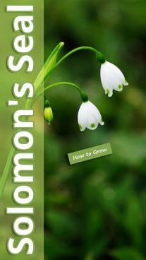 How to Grow Solomon's Seal
