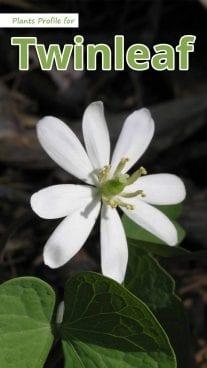 Plants Profile for Twinleaf