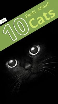 Top 10 Facts About Cats