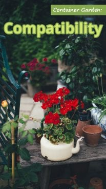Container Garden: Compatibility