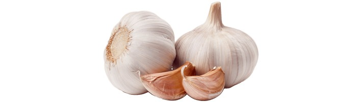 Growing Garlic in Containers